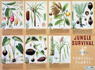 Jungle survival: Edible tropical plants