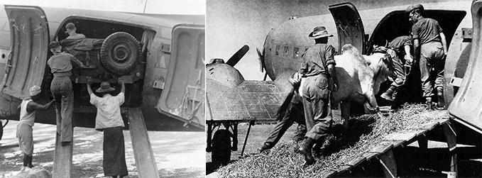 A Jeep and an ox loaded onto an RAF Dakota