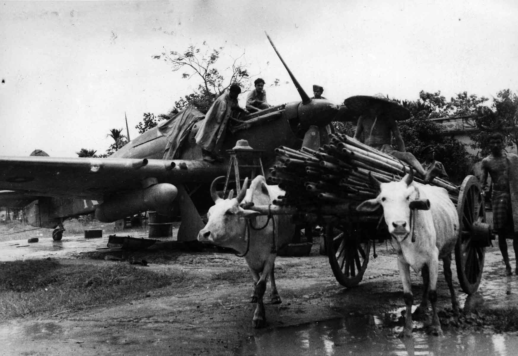An ox-cart passing in front of a Hawker Hurricane being serviced by an Indian ground crew, Burma, 1944 (RAFM PC71/19/1755)