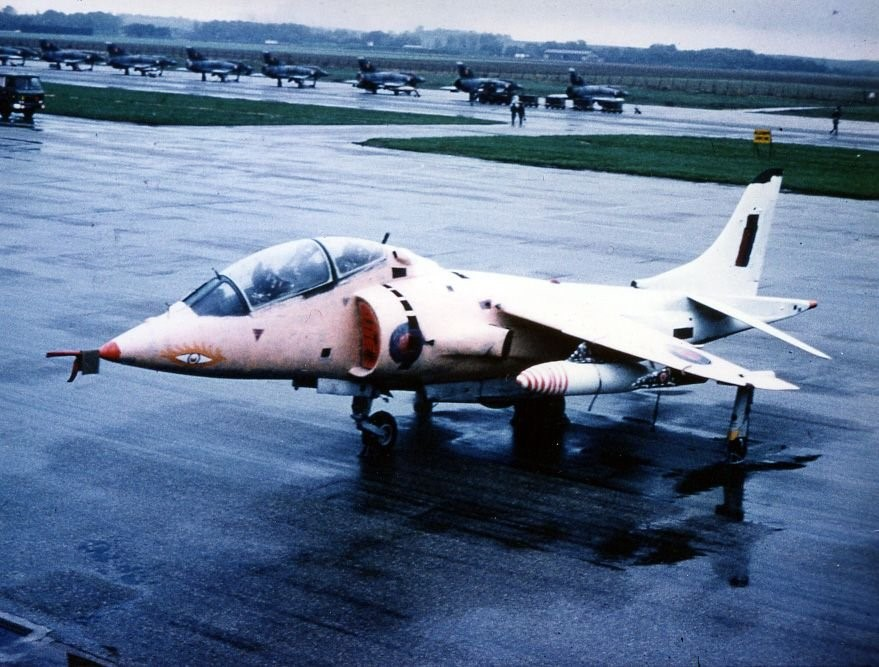 pink Harrier