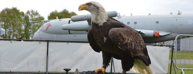 Eagles at Easter Cosford