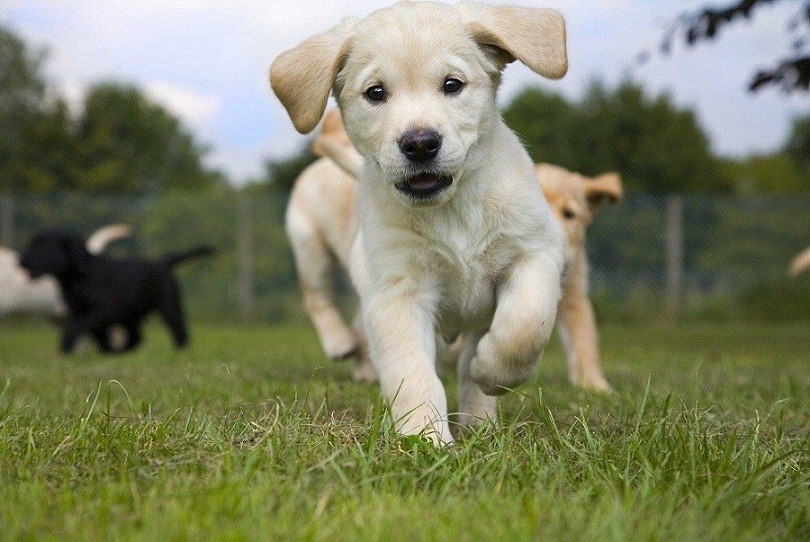 Guide dog puppy recruits descend on cosford