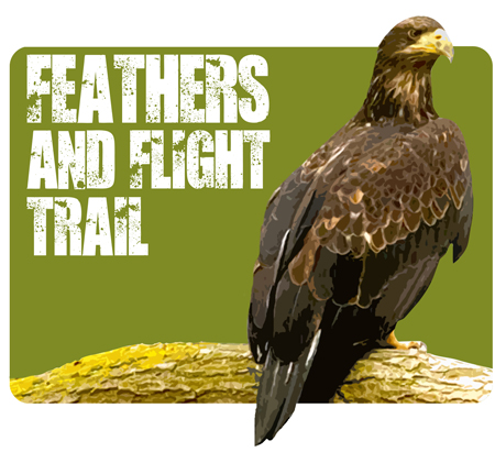 Feathers and Flight Trail