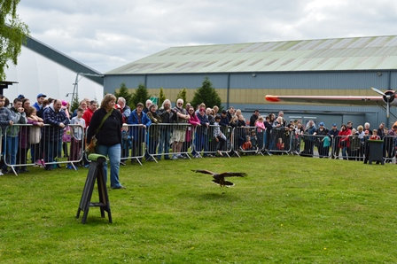 Birds of prey at Cosford