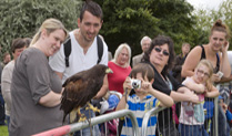 Wild Bird Week at The Royal Air Force Museum