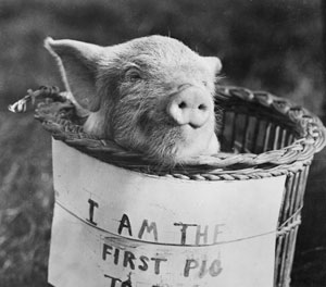 Brabazon's passenger, proving that pigs do fly, 4 November 1909