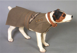 Royal Flying Corps Yorkshire Terrier