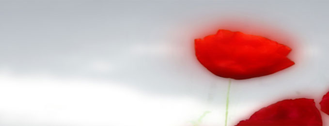 Dedicate a poppy to First World War Fallen